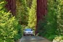 Sentieri tra le sequoie
