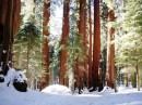 Sequoia National Park - Inverno