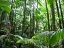 Giardino tropicale isole Hawaii