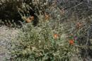 Anche nel deserto nascono i fiori
