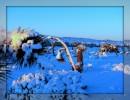 Spettacolare inverno al Mojave Desert
