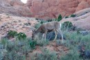 Fauna - Arches National Park
